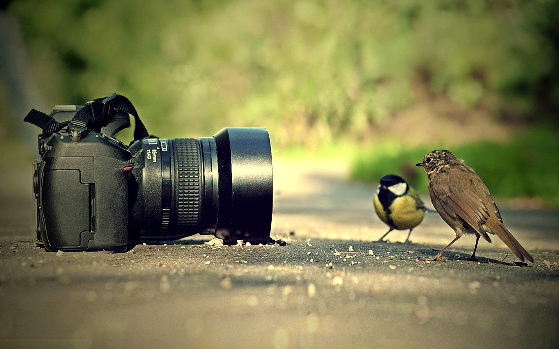 از مناظر عکس بگیرید