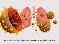 چرا ویروس کرونا به دستگاه تنفسی حمله می کند؟