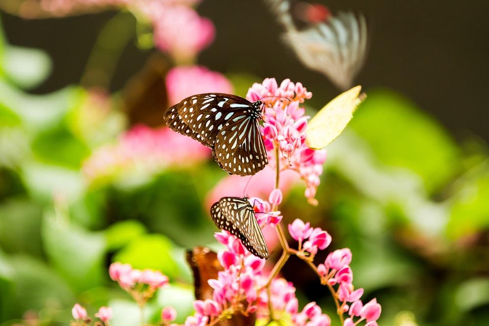 پارک پروانه کوالالامپور